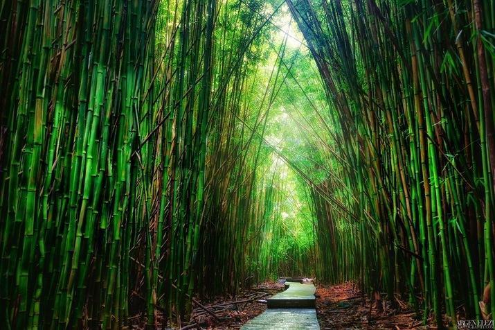 مسیر پیاده روی زیبا هاوائی