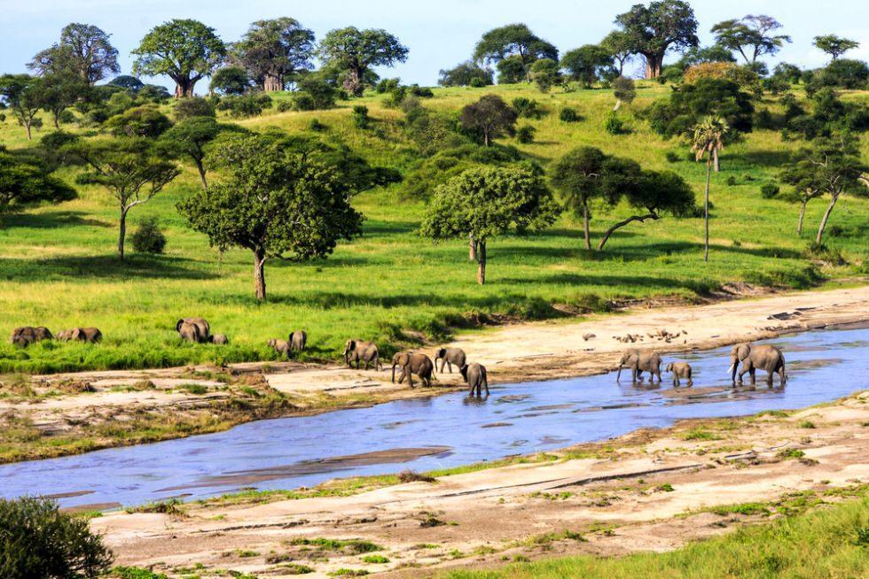 اولین بار آفریقا: ایده هایی برای سفر شما