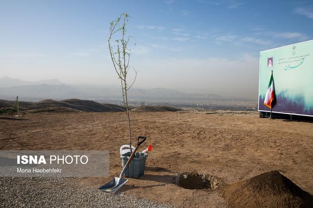 نبود اعتبار برای آبیاری جنگل های دست کاشت استان بوشهر