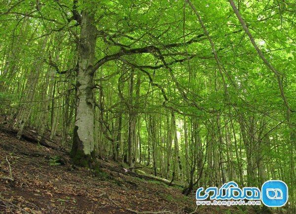 بسته محافظت از جنگل های شمال