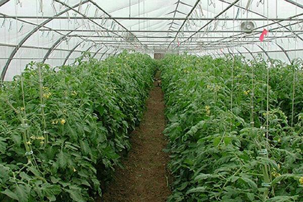چهار روز فرصت برای سرمایه گذاران نهضت گلخانه ای در خراسان جنوبی