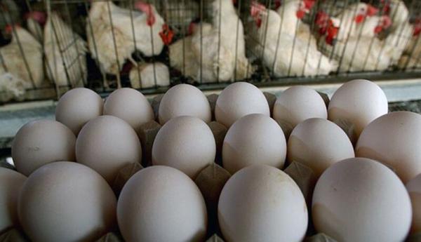 هشدار درباره شرایط تولید تخم مرغ
