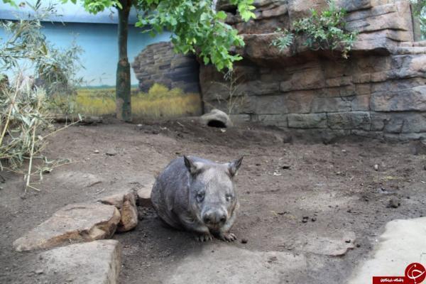 ویزای کانادا: باغ وحش تورنتو در سوگ هملت