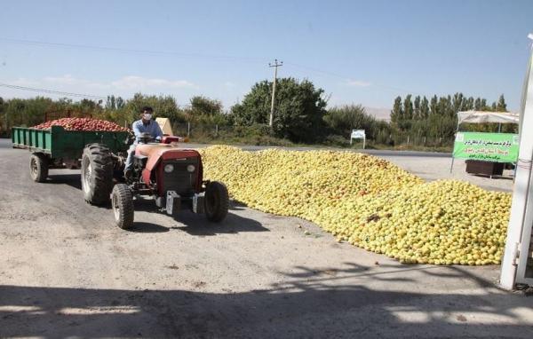 طراحی سر در ورودی ویلا: شروع خرید تضمینی سیب صنعتی از باغداران آذربایجان غربی